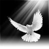 Dünya Barışı Sağlanabilir mi?
