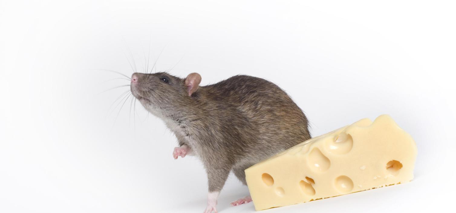 Peynirimi Kim Kaptı?